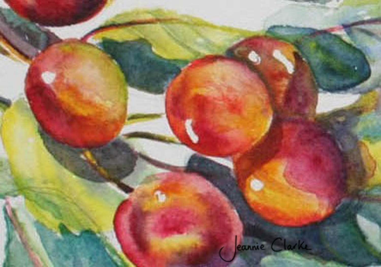 3 cherries. wmkd, cropped